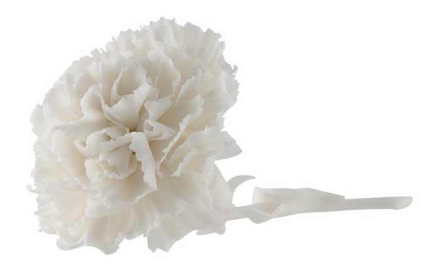 carnation porcelain