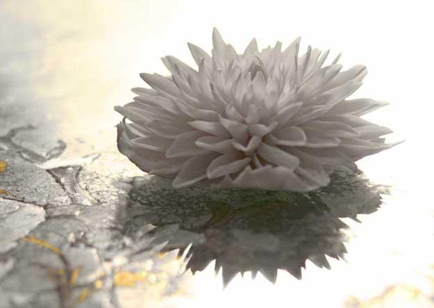 dahlia porcelain flowers